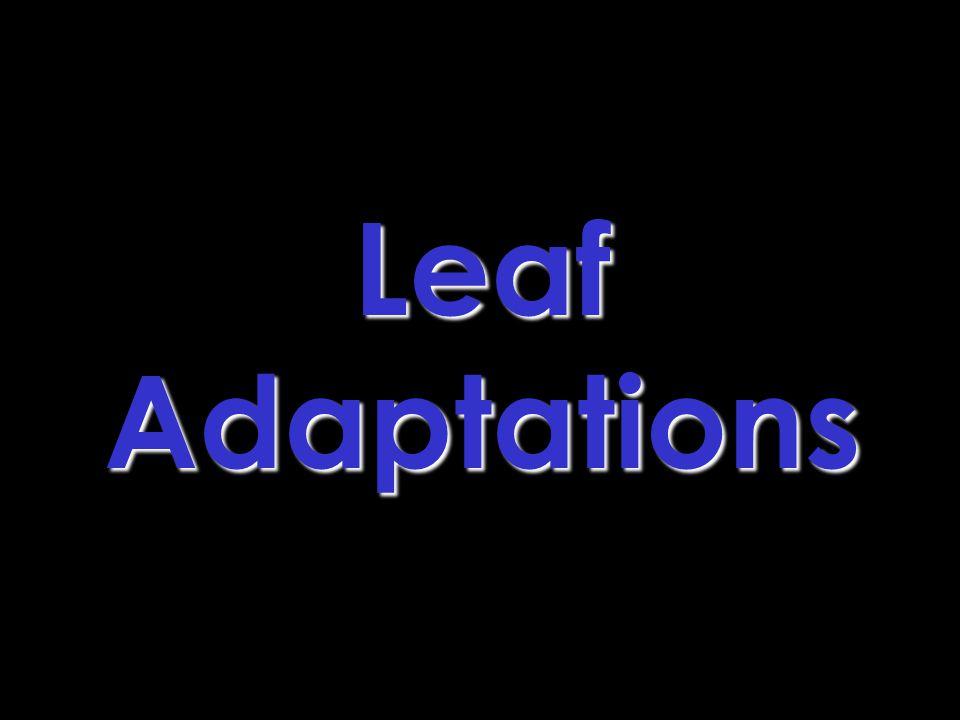 Leaf Adaptations