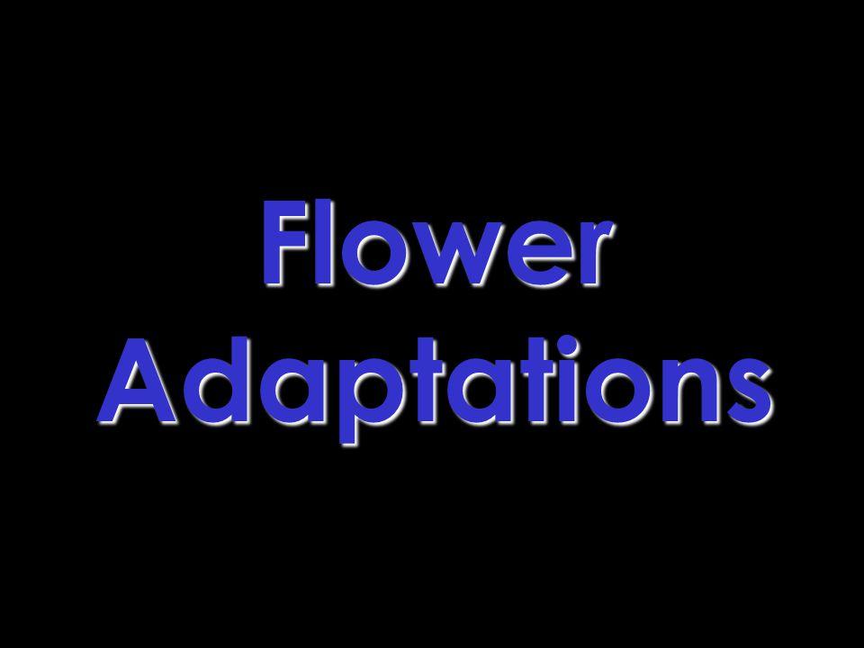 Flower Adaptations
