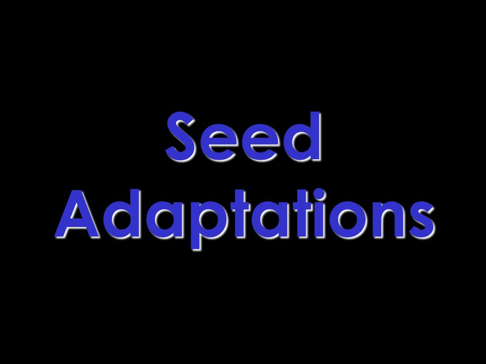 Seed Adaptations