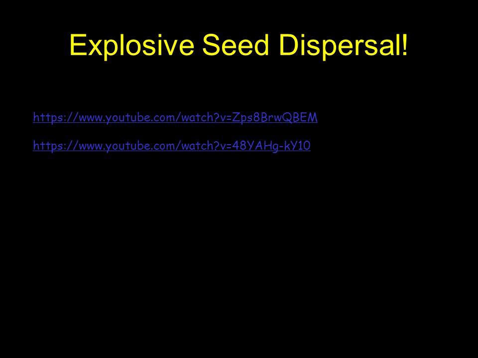 Explosive Seed Dispersal!