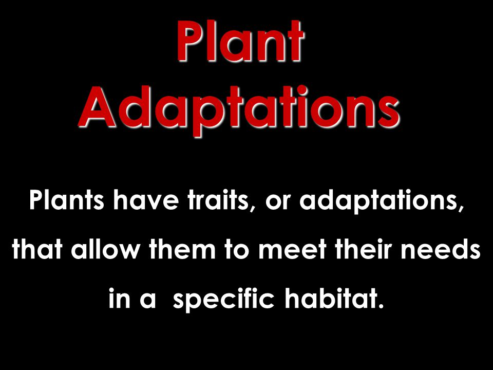 Plant Adaptations Plants have traits, or adaptations,