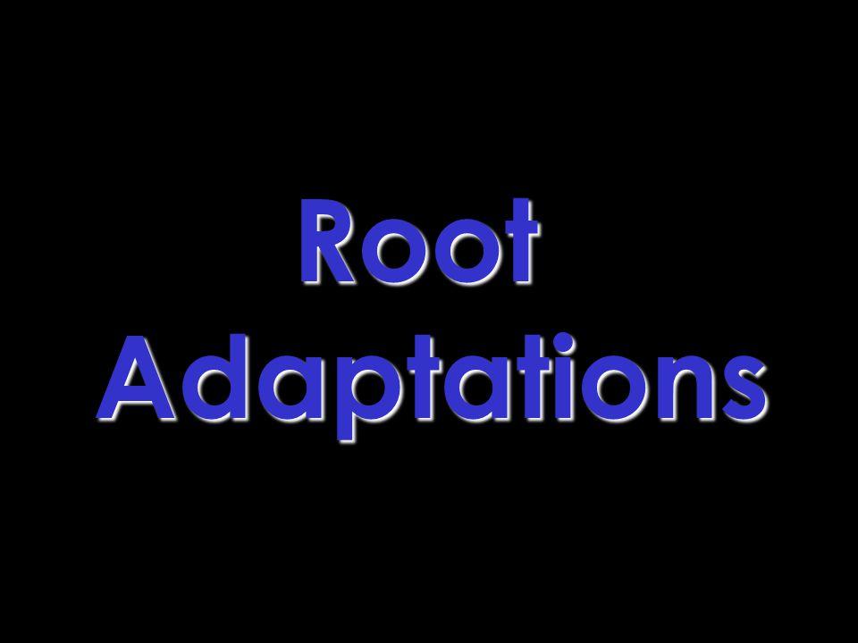 Root Adaptations