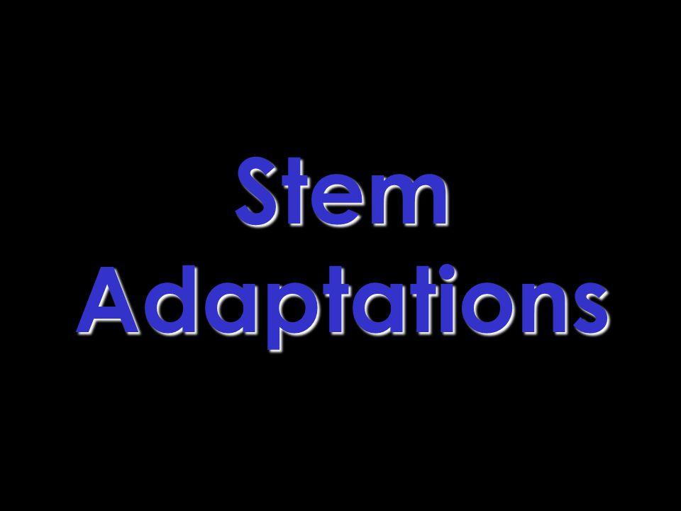 Stem Adaptations