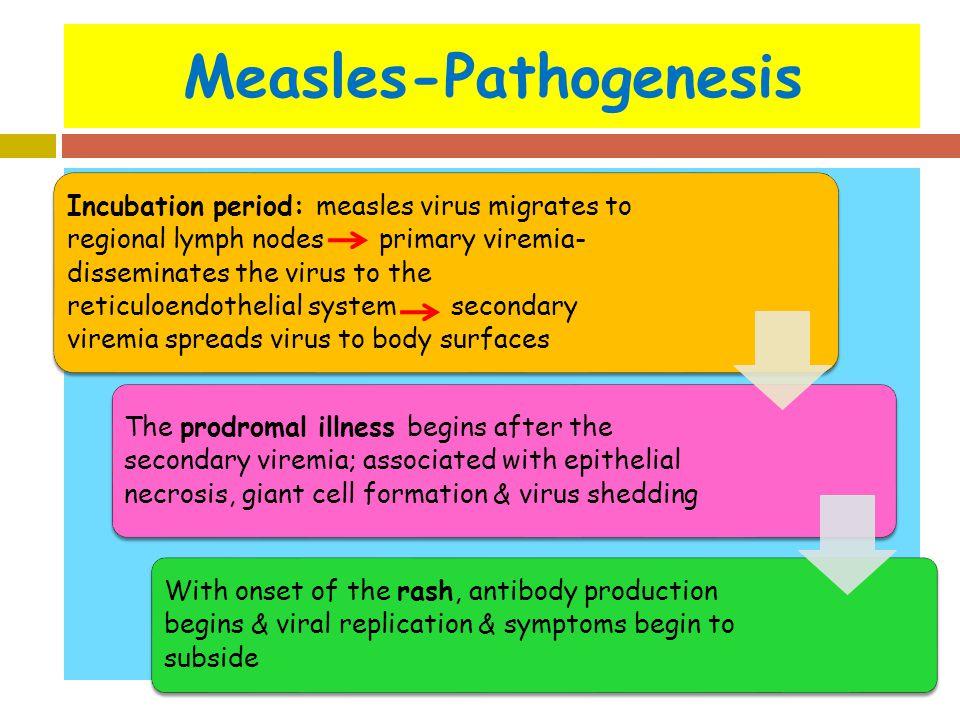 Measles-Pathogenesis
