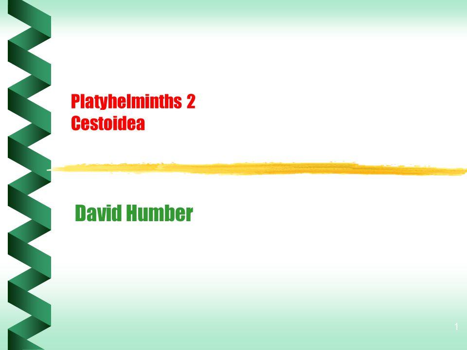Platyhelminths 2 Cestoidea