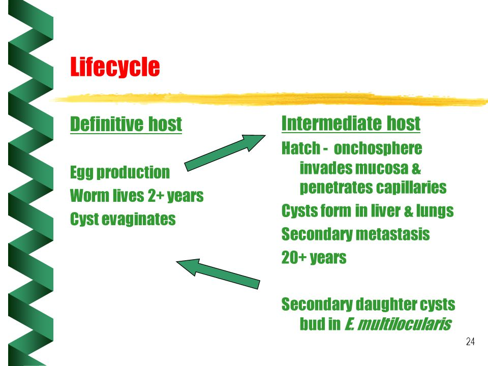 Lifecycle Definitive host Intermediate host