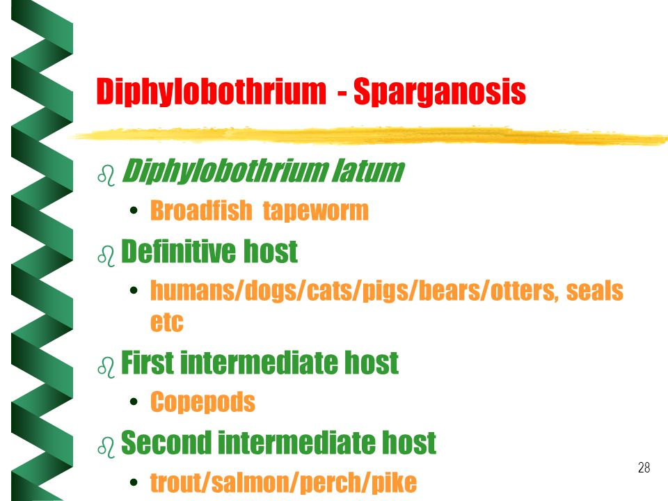 Diphylobothrium - Sparganosis