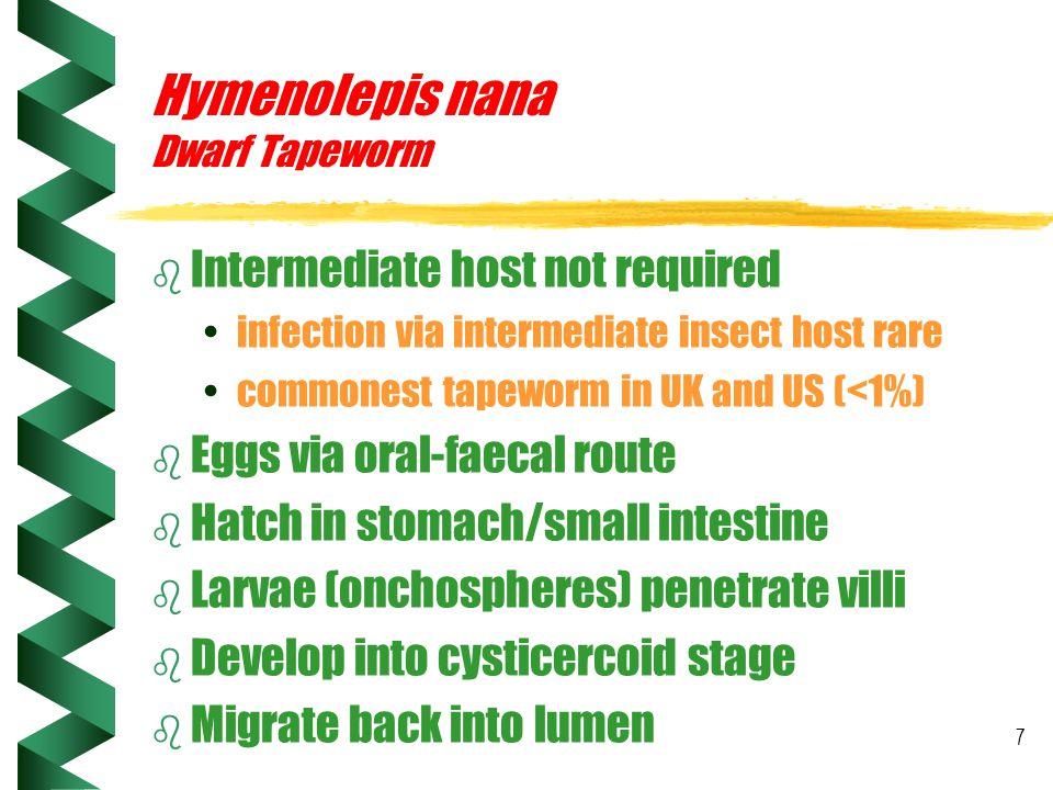 Hymenolepis nana Dwarf Tapeworm