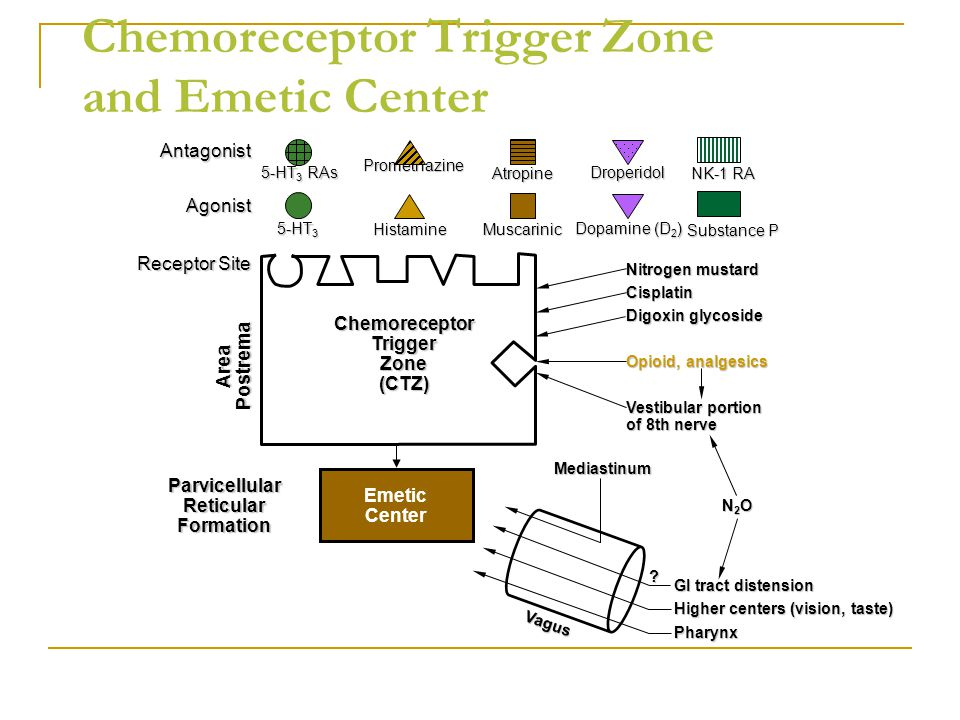 Chemoreceptor Trigger Zone and Emetic Center