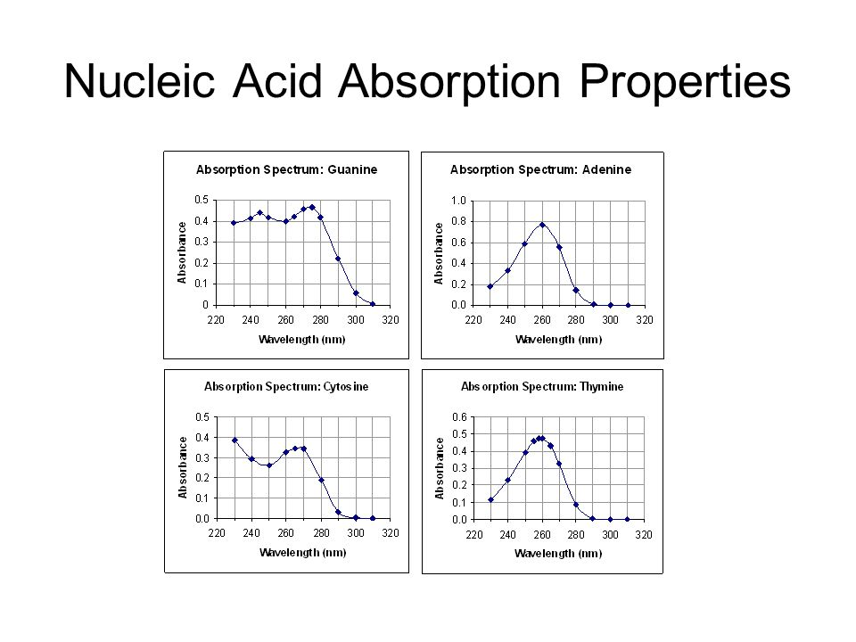 Nucleic Acid Absorption Properties