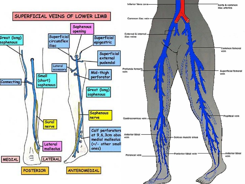 Lower Extremity