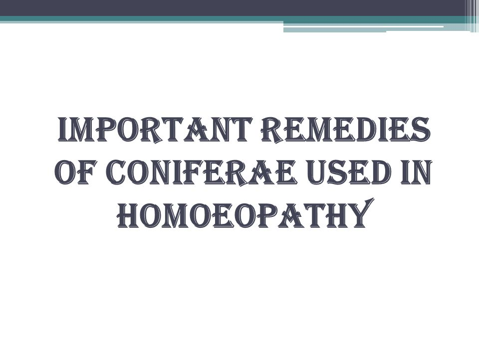 Important remedies of coniferae used in Homoeopathy