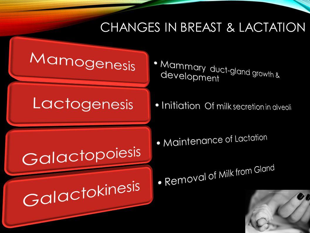 Mamogenesis Lactogenesis Galactopoiesis Galactokinesis