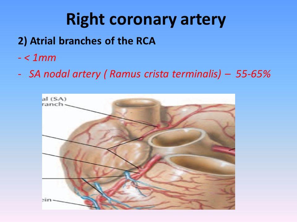 Anatomy of the coronary arteries
