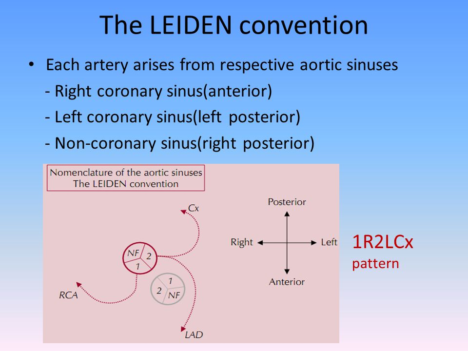 The LEIDEN convention 1R2LCx pattern