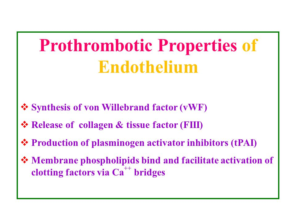 Prothrombotic Properties of Endothelium