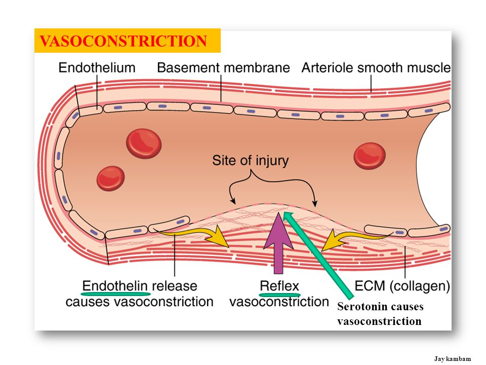 VASOCONSTRICTION Serotonin causes vasoconstriction