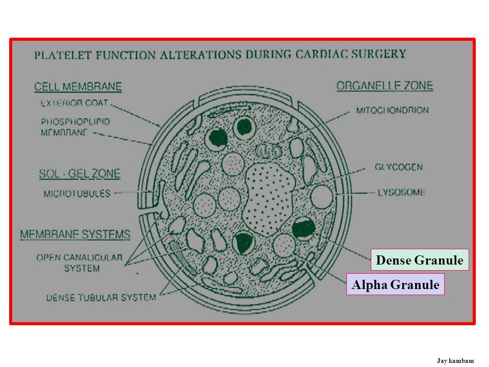 Dense Granule Alpha Granule