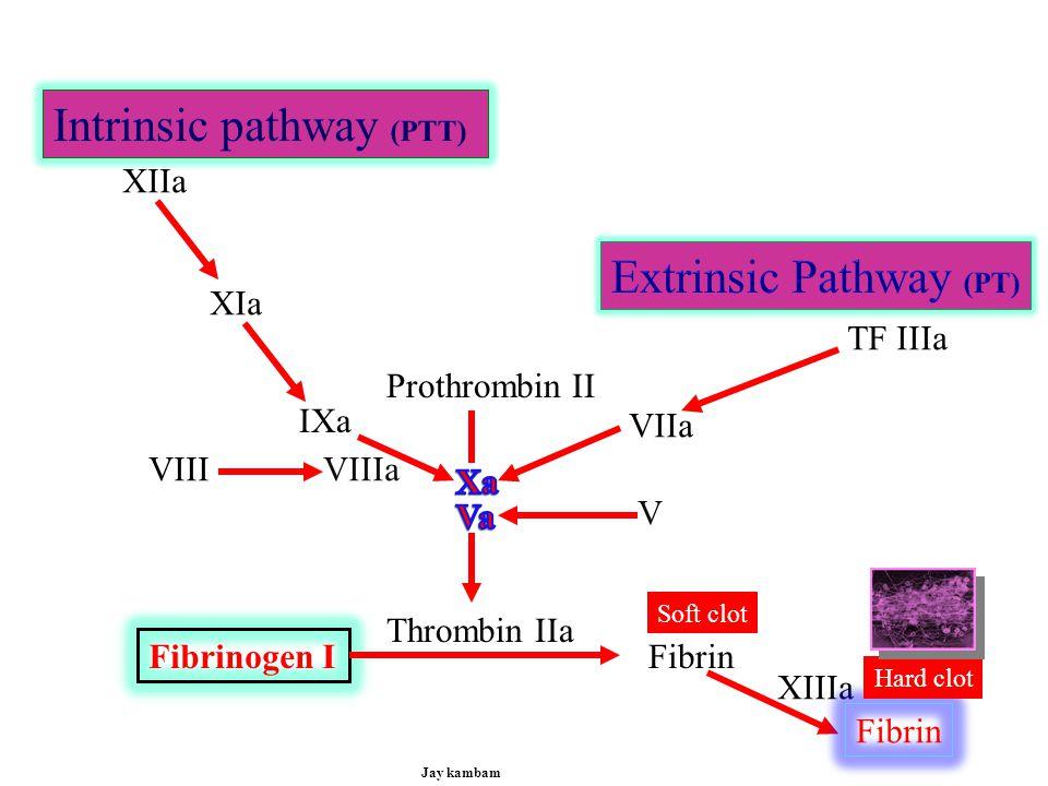 Intrinsic pathway (PTT)