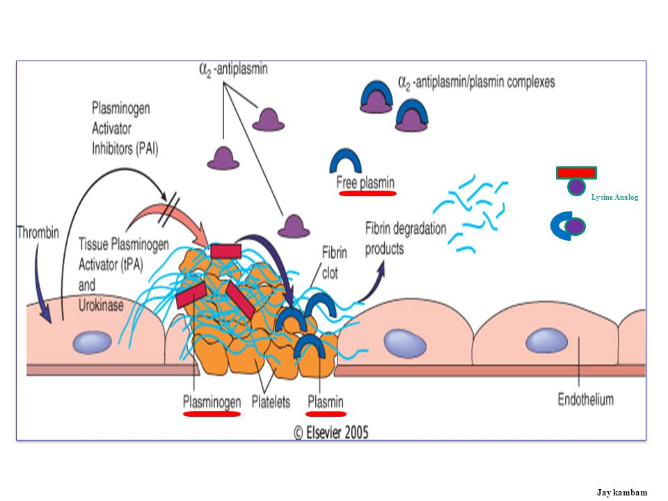 Lysine Analog Lysine Analog: Tranaxemic acid, Amicar Jay kambam