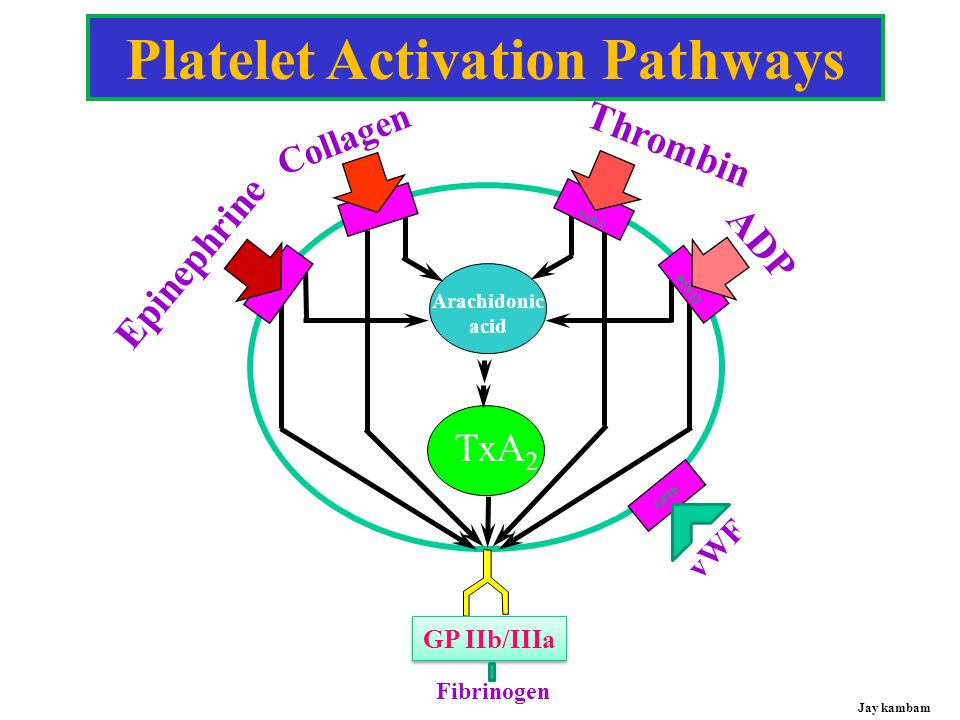 Platelet Activation Pathways