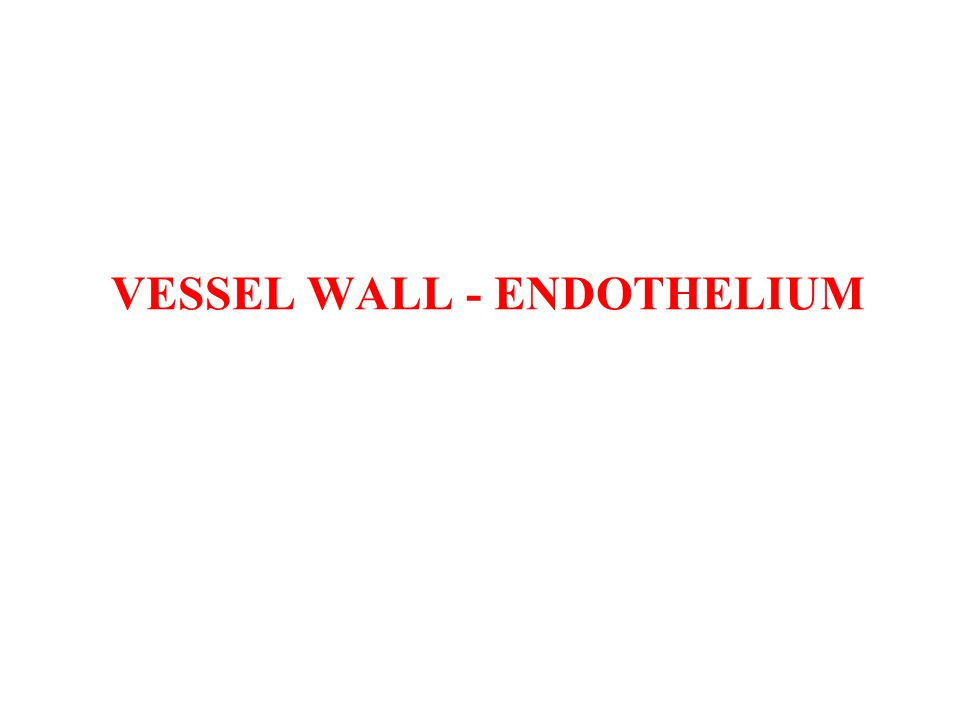 VESSEL WALL - ENDOTHELIUM