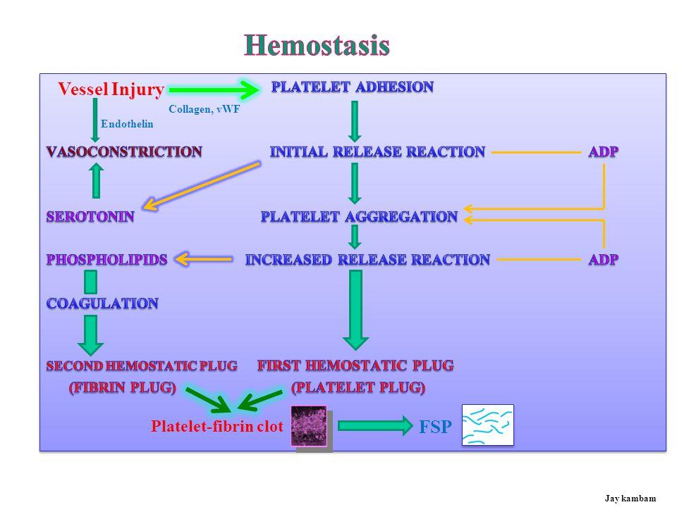 Hemostasis Vessel Injury FSP Platelet-fibrin clot PLATELET ADHESION