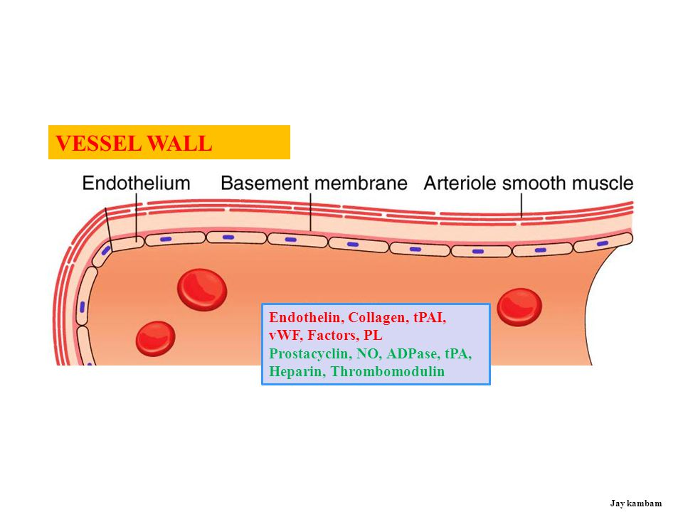 VESSEL WALL Endothelin, Collagen, tPAI, vWF, Factors, PL