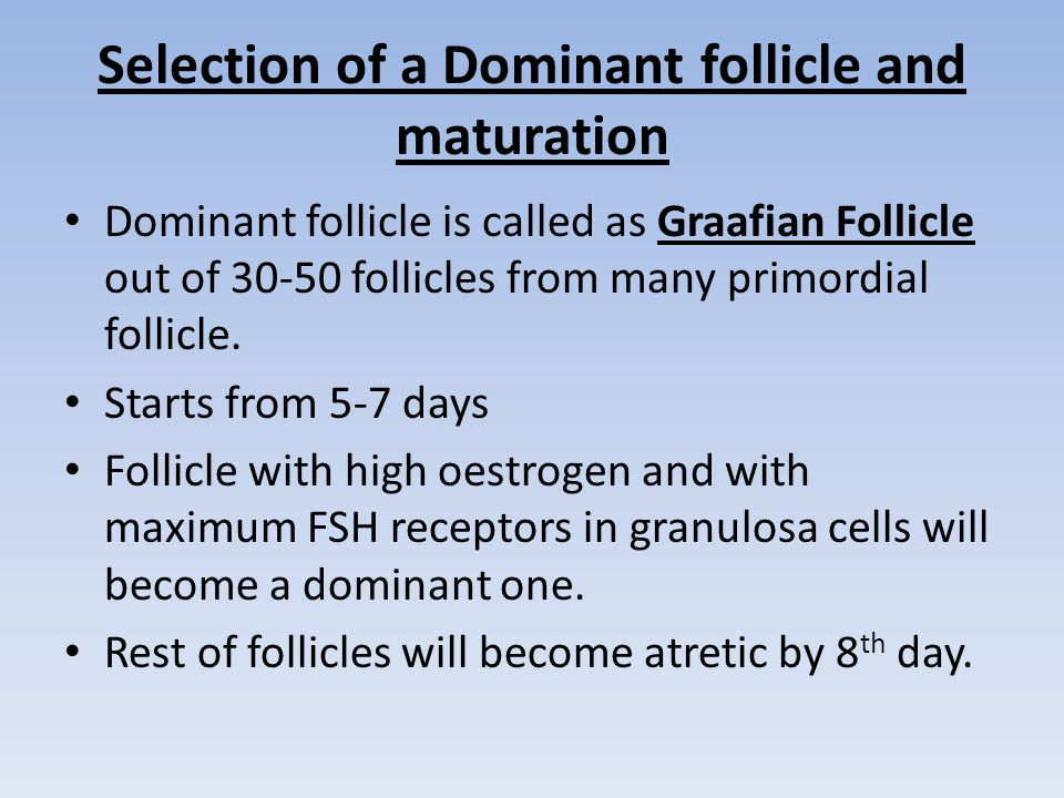 Selection of a Dominant follicle and maturation