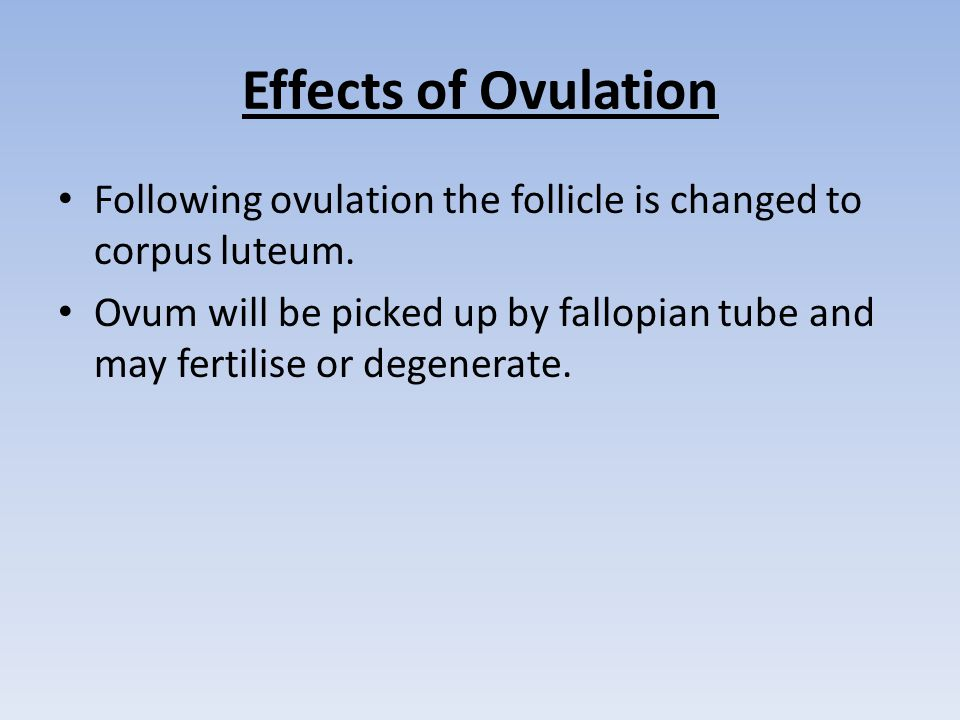 Effects of Ovulation Following ovulation the follicle is changed to corpus luteum.