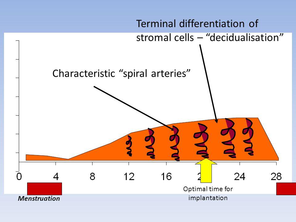 Optimal time for implantation