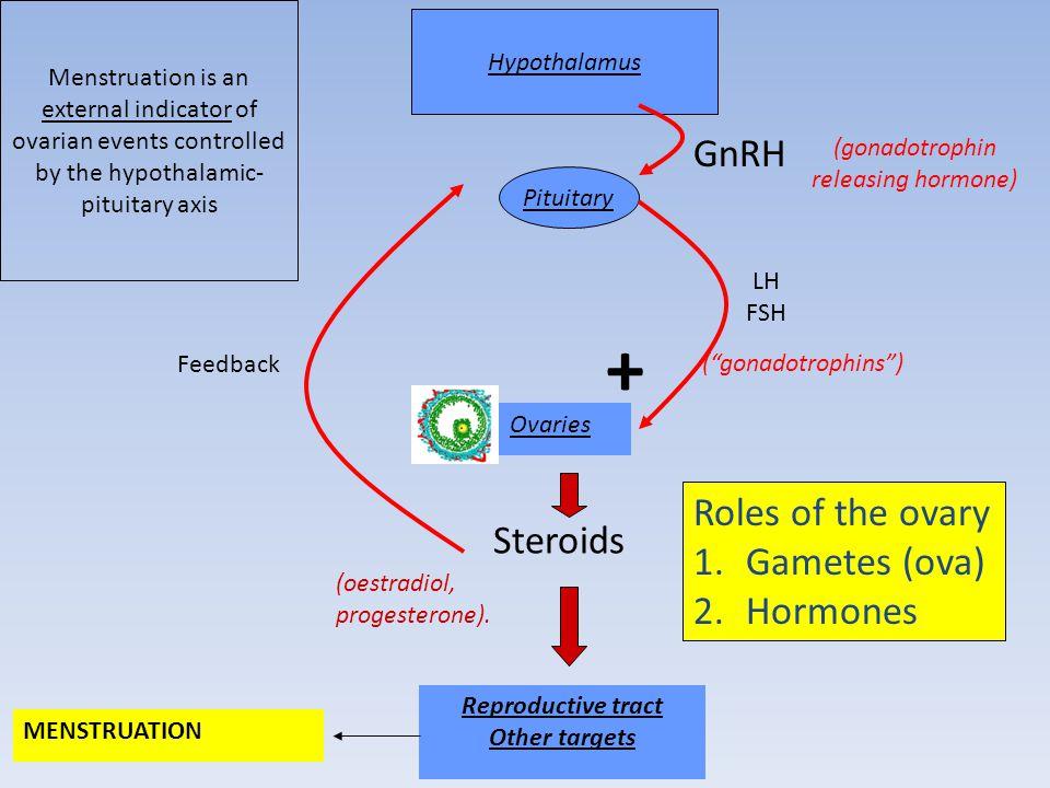 (gonadotrophin releasing hormone)