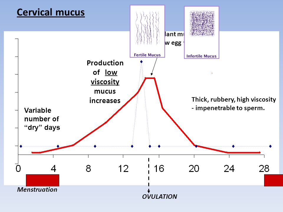 Abundant mucus - like raw egg white of low viscosity mucus increases