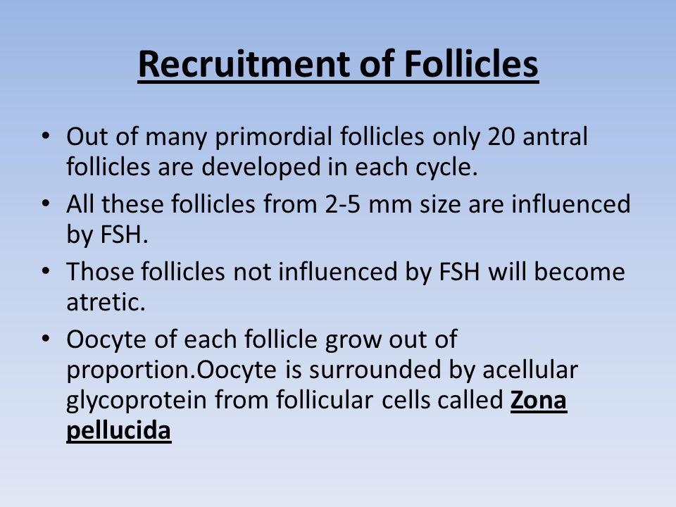 Recruitment of Follicles