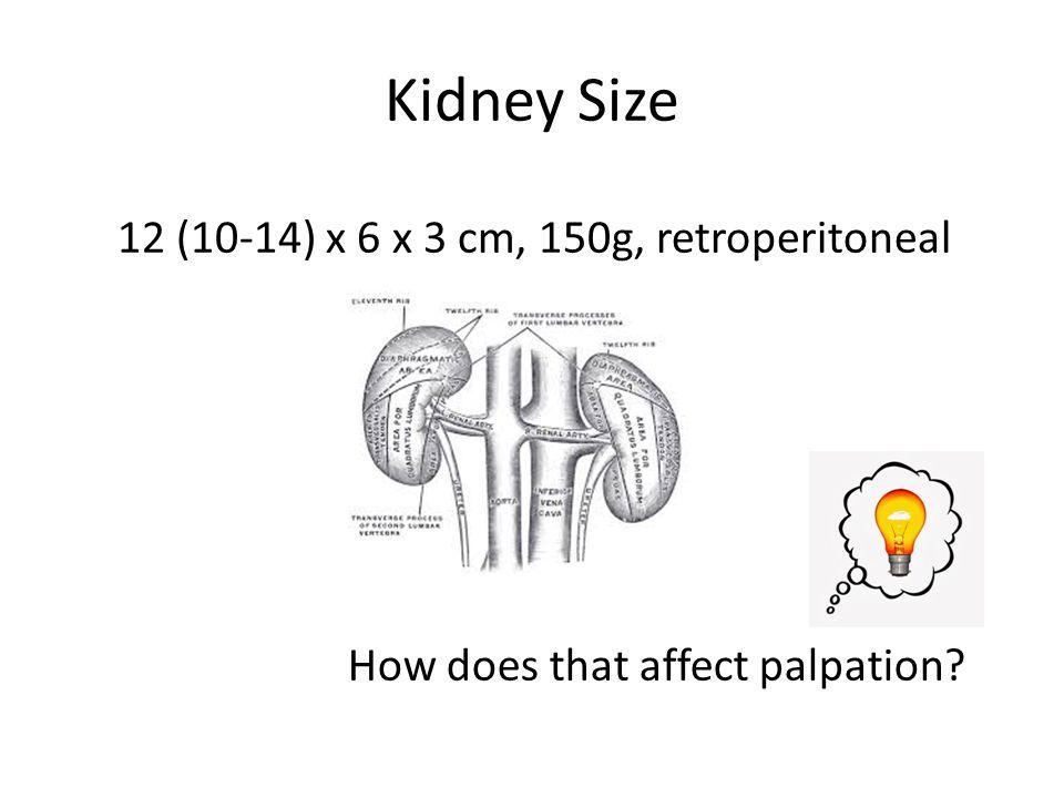 Kidney Size 12 (10-14) x 6 x 3 cm, 150g, retroperitoneal