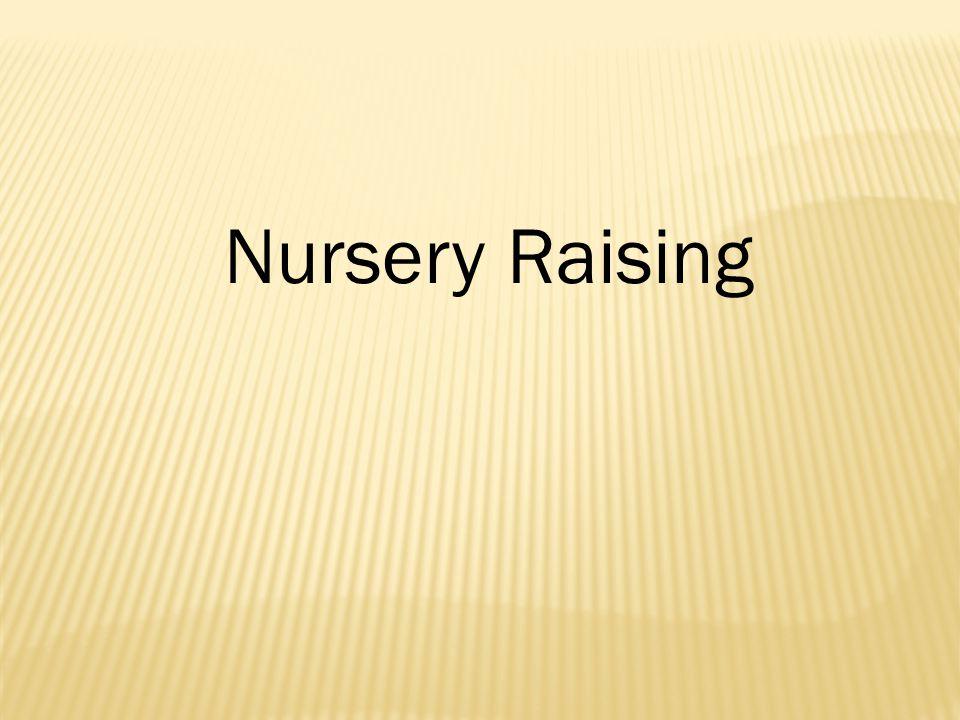 Nursery Raising