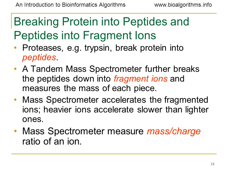 Breaking Protein into Peptides and Peptides into Fragment Ions