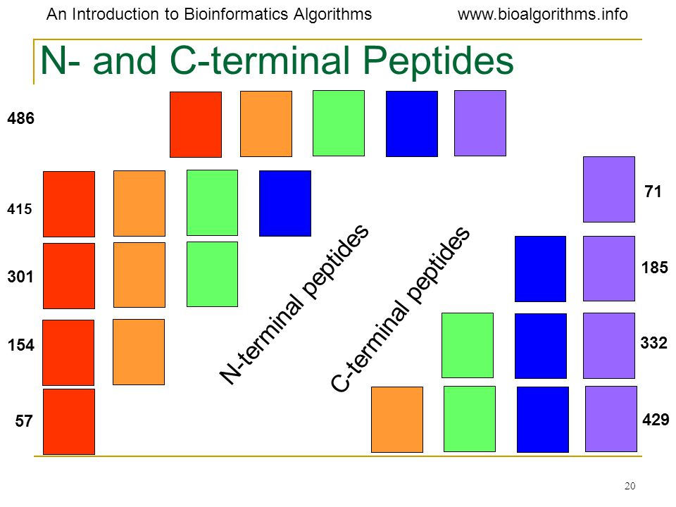 N- and C-terminal Peptides