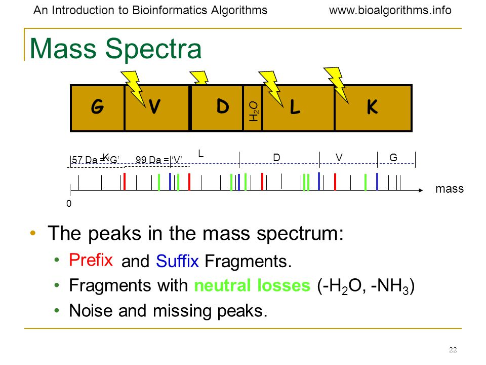Mass Spectra The peaks in the mass spectrum: G V D D L K Prefix