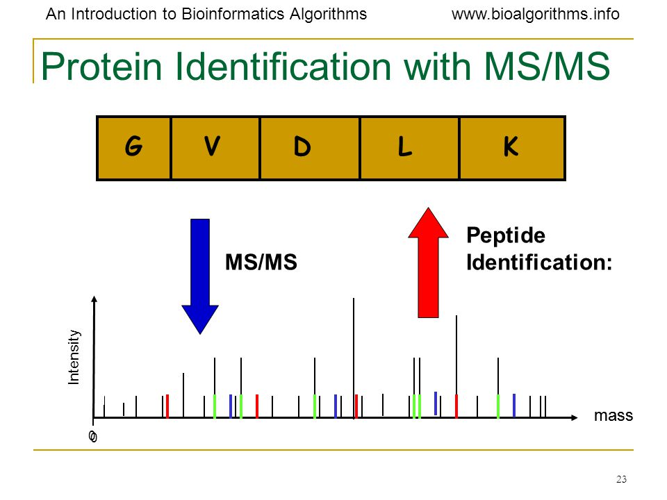 Protein Identification with MS/MS