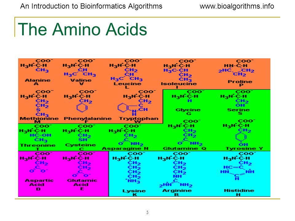 The Amino Acids