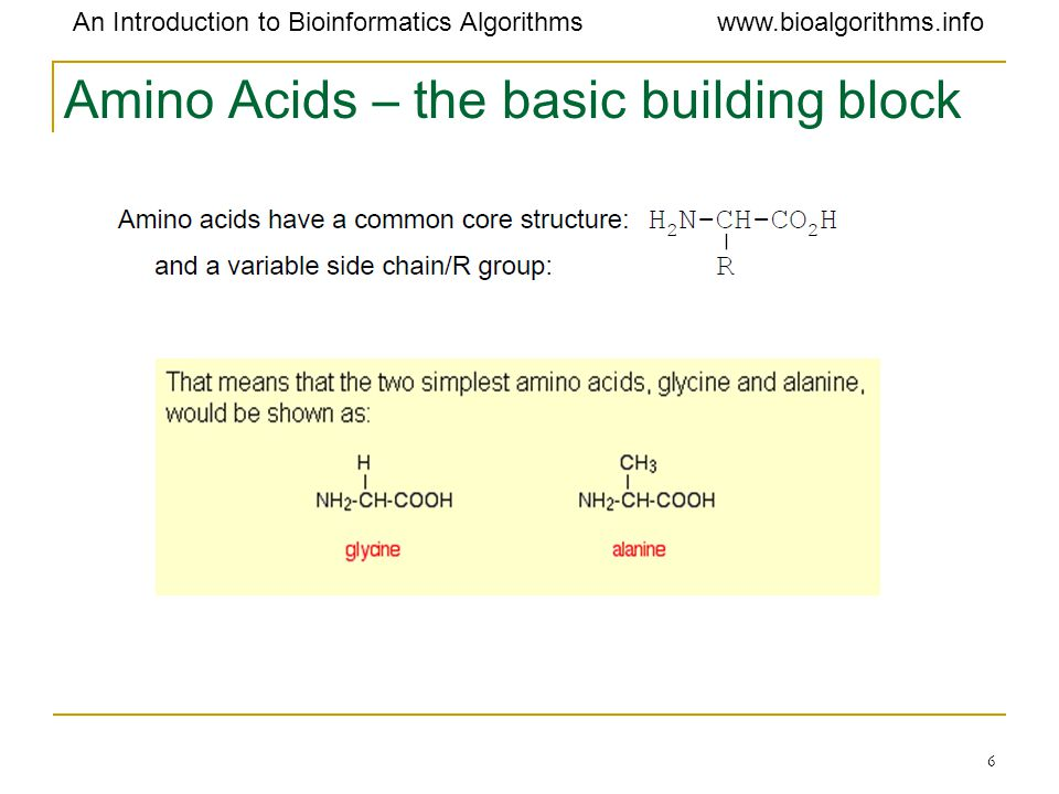 Amino Acids – the basic building block