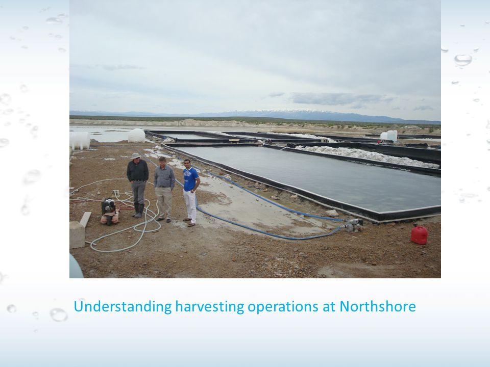 Understanding harvesting operations at Northshore