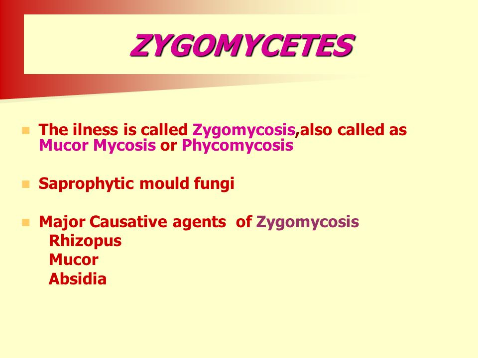 ZYGOMYCETES The ilness is called Zygomycosis,also called as Mucor Mycosis or Phycomycosis. Saprophytic mould fungi.