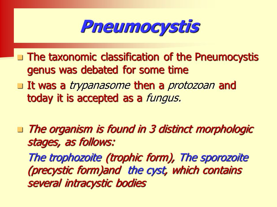 Pneumocystis The taxonomic classification of the Pneumocystis genus was debated for some time.