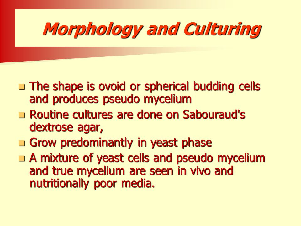 Morphology and Culturing