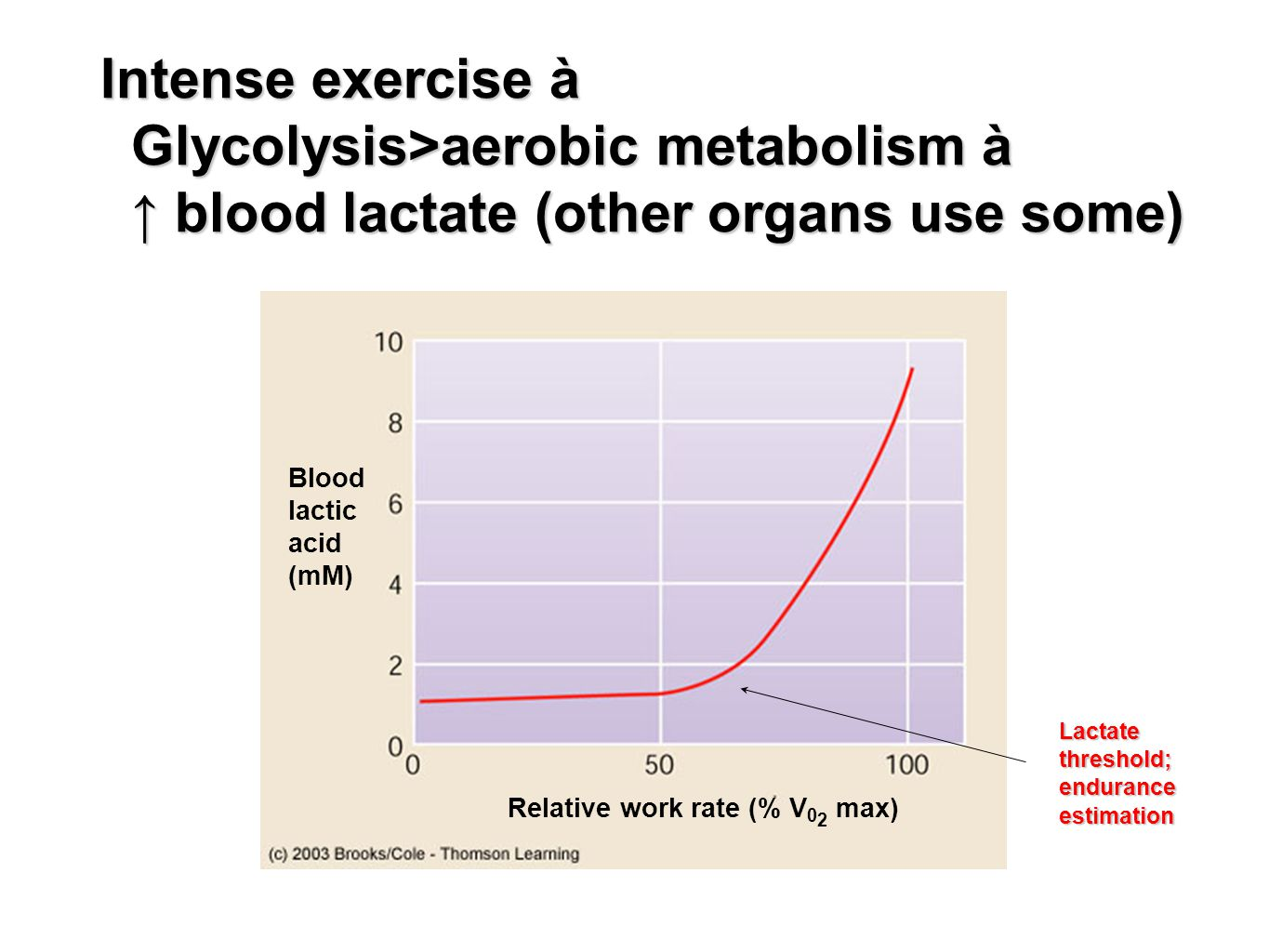 Intense exercise à Glycolysis>aerobic metabolism à ↑ blood lactate (other organs use some)