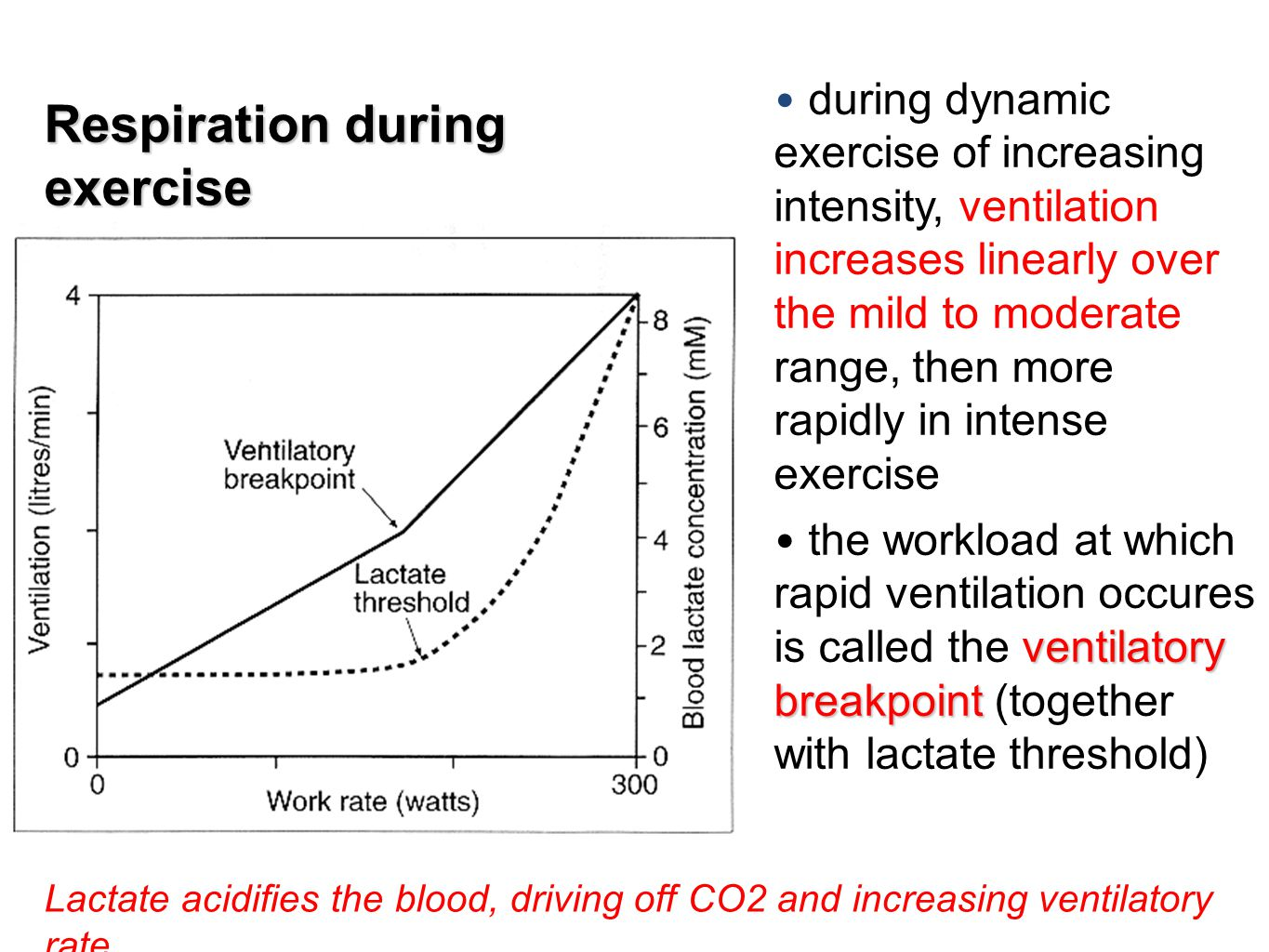 Respiration during exercise