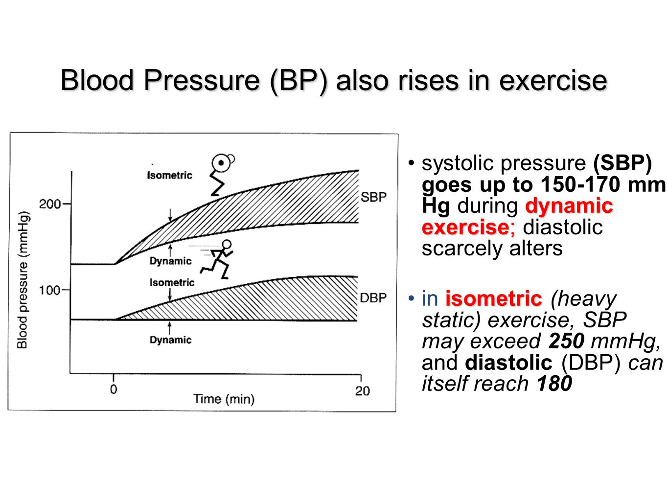Blood Pressure (BP) also rises in exercise