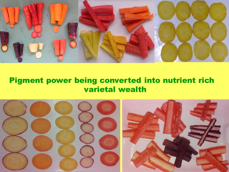 Pigment power being converted into nutrient rich varietal wealth